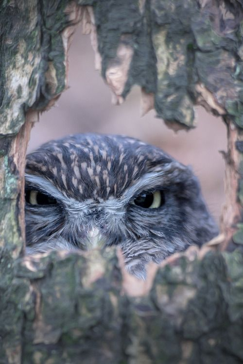 Owl in a mood