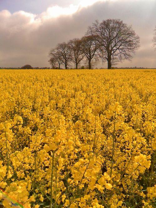 Sutton Coldfield, England