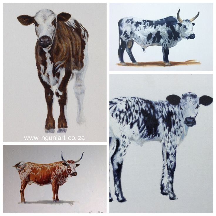 Nguni Cattle Paintings  Oil Paintings on Canvas  www.nguniart.co.za