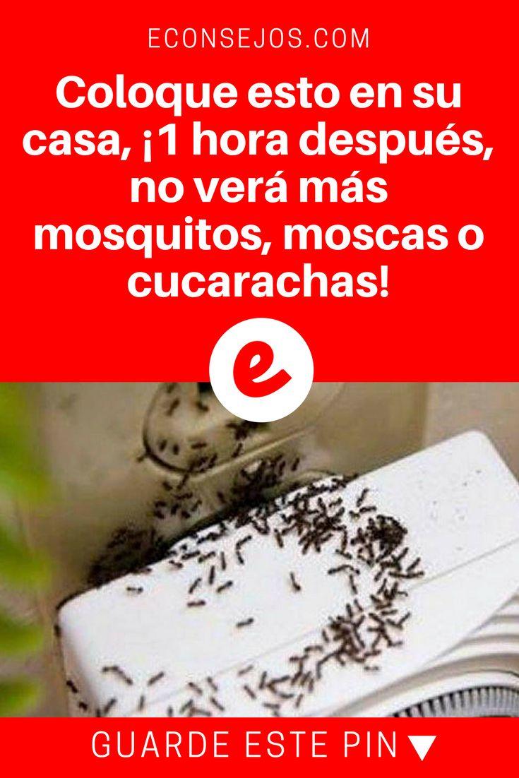 M s de 25 ideas incre bles sobre silueta humana en - Eliminar moscas en casa ...