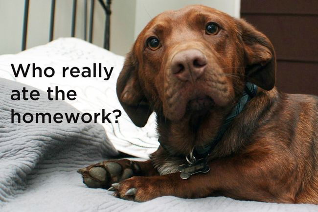 Dog's philosophical questions, #2.