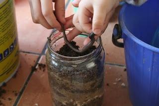 Granja de lombrices de tierra | experCiencia