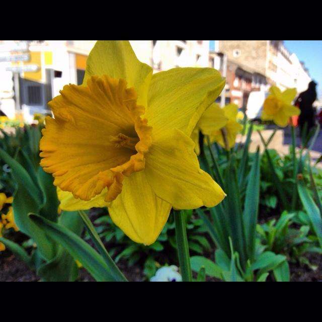 Spring awakening in Paris ;-)