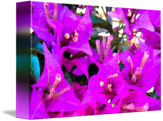 """""""bougainvillea+in+italy++two""""+by+Vivien+Jane+C,+Rome+//++//+Imagekind.com+--+Buy+stunning+fine+art+prints,+framed+prints+and+canvas+prints+directly+from+independent+working+artists+and+photographers."""