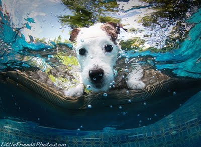 ... about underwater dogs on Pinterest Pets, Swimming and Underwater