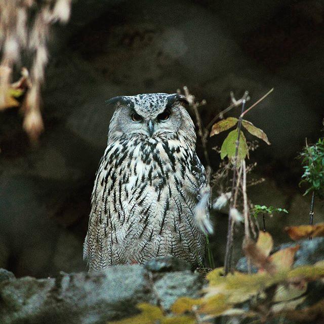 Вторник. Утро. Чувствую себя этой совой. Большие брови, решительный взгляд.  #owl #bird #Moscow #zoo #tuesday #hardday