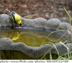 Recommendation on best concrete sealant to use for a bird bath. Non-toxic concrete sealer information. A good sealant will protect a painted bird bath.