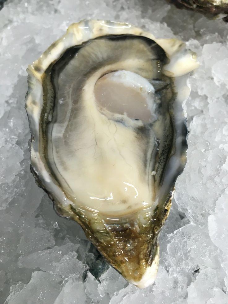 "Oyster ""tortoli"" from Sardinia"