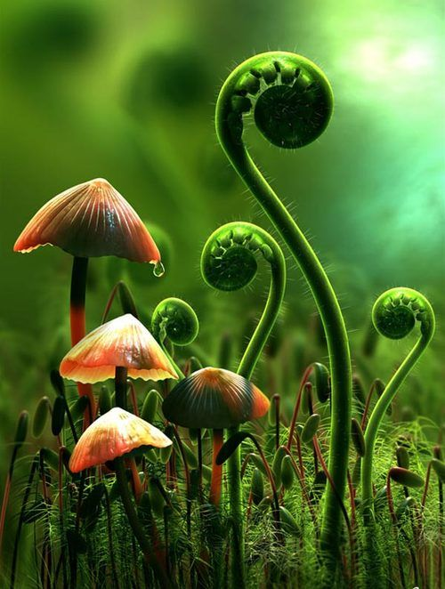 Mushrooms & Ferns, uploaded by Sam OU812, category tags: