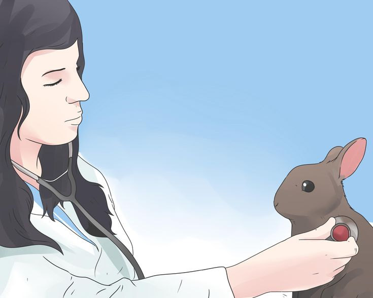 How+to+Care+for+Mini+Lop+Rabbits+--+via+wikiHow.com