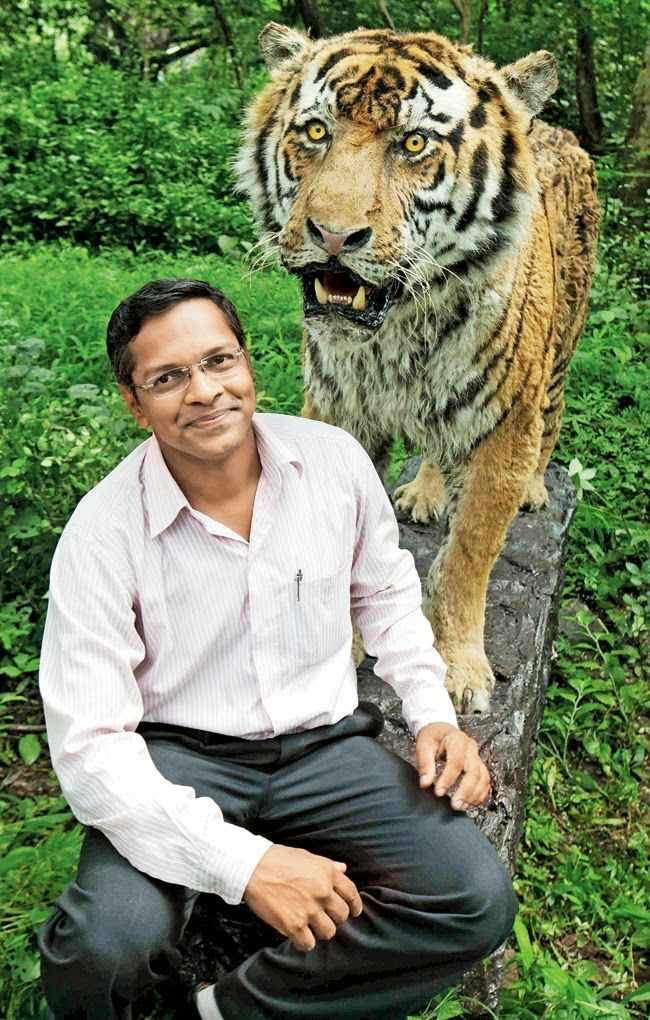 The Wildlife Taxidermy Centre, which started operations from a garage at the Sanjay Gandhi National Park in 2009, has been instrumental in doing the taxidermy of more than 100 animals, birds and reptiles. Now forest departments and private institutions from across the country are approaching the centre to preserve wild animals after their death for scientific and educational purposes.
