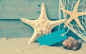 Wallpaper shore, seashells, beach, beach, sand, sea, sand, shell, summer, starfish