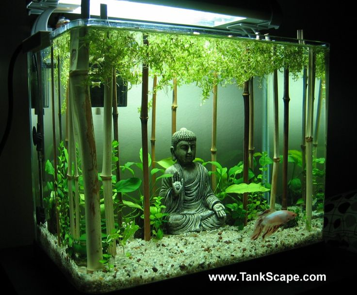 live bamboo in a tank: leaves must be above water, needs to be fairly deeply embedded to stop from falling over.