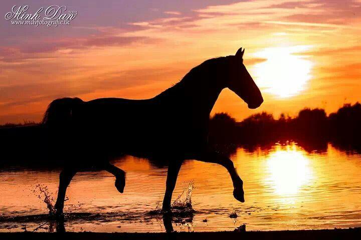 Horse  #horse#sunset