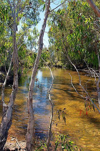 Australian outback, Bluewater Creek near Townsville, Queensland