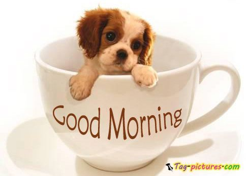 Image result for images funny cute up and at em love coffee cute monday morning