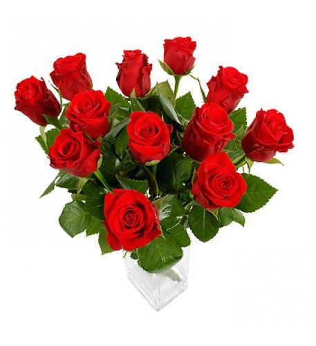 The rose is one of the most recognised symbols of romance in the world. As well as representing the passion and desire of love celebrated on Valentine's Day, the red rose has become a firm hardy favourite among flower lovers.