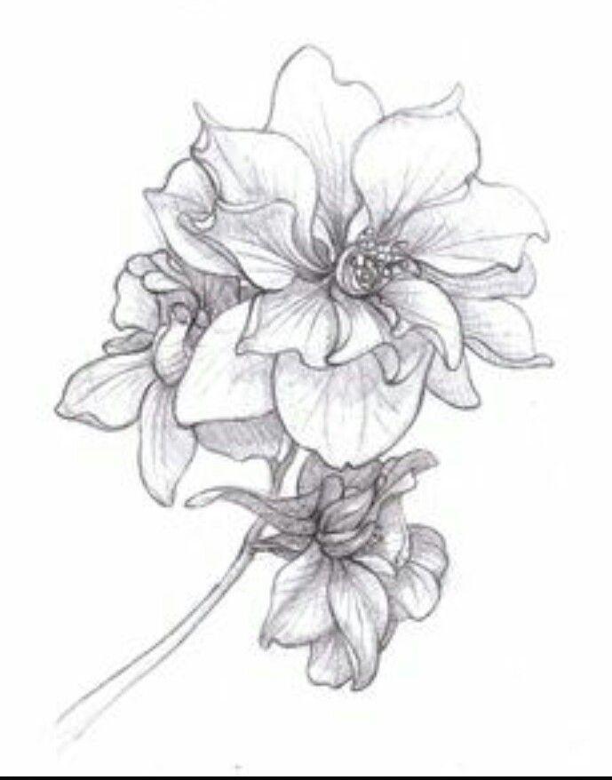 July = Larkspur drawing