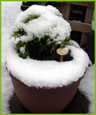 Miniature Gardens can last through the winter with the right plants and container. #miniaturegarden