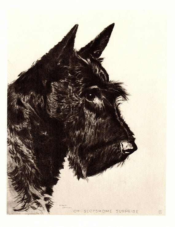 1940s Vintage SCOTTISH TERRIER Print Scottie Dog Art Portrait