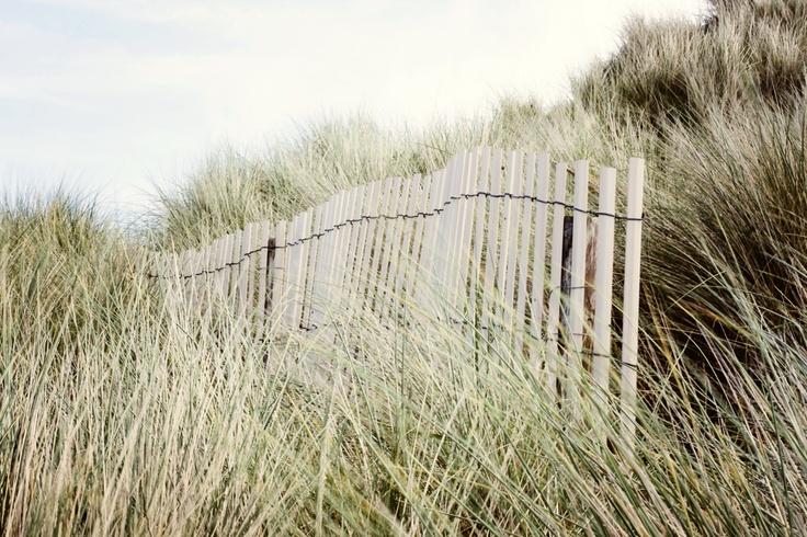 Palissade dans les dunes