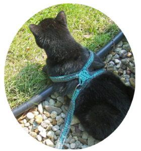Kitty harness! Great for travelling with my inside cat.