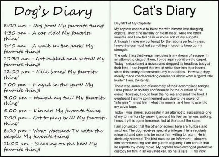THIS IS SO FUNNY Dog's Diary vs Cat's Diary. You will look