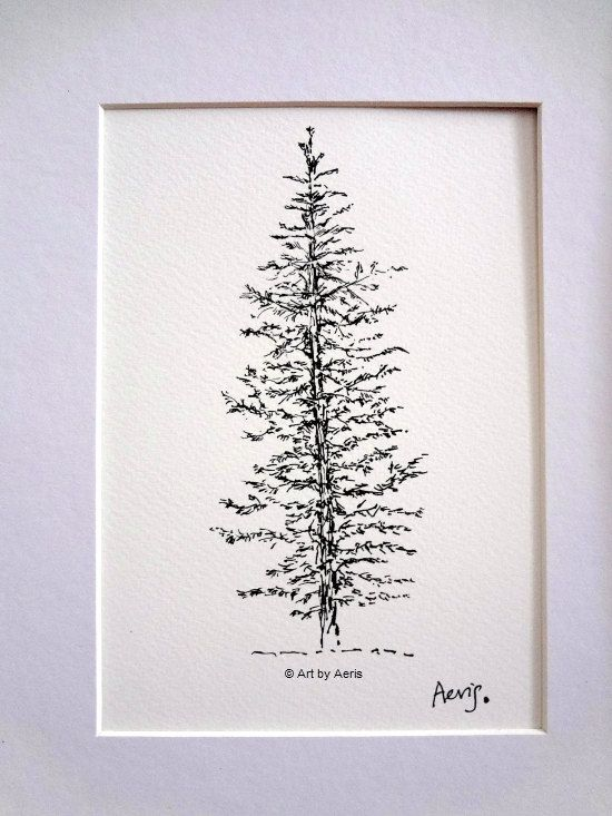 Evergreen Pine Tree Ink Pen Drawing 5 x 7 Black & by ArtbyAeris