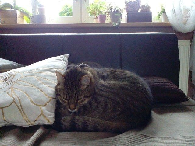 Čiko is my cat:-) :-) :-) :-) :-) :-)