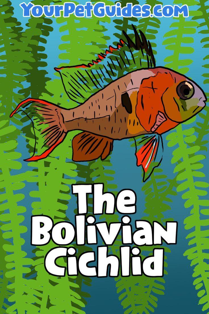 Www Yourpetguides Com In 2020 Pet Fish Aquarium Fish Tank Tropical Fish Tanks