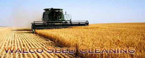http://www.walcoseed.com.au/ - Steps Included for Superior #SeedProcessing in #Balaklava https://walcoseed.wordpress.com/2016/03/31/steps-included-for-superior-seed-processing-in-balaklava/ via @wordpressdotcom