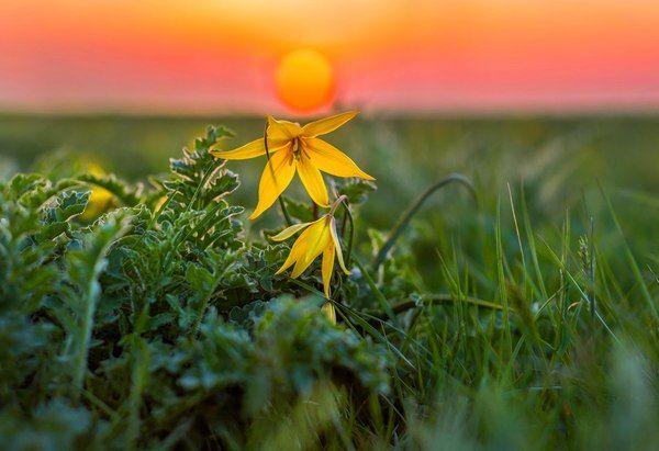 Весна в степи Ставропольский край, Россия, фотография, весна, цветы, зелень, пейзаж, длиннопост