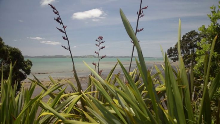 Omana Regional Park by Everywhere you go. Omana is a coastal farm park, 40 minutes from Auckland City. It has a pohutukawa fringed beach and plenty of shady spots for picnicking, with barbeques to use. Complete with a playground, it is a great family day out.