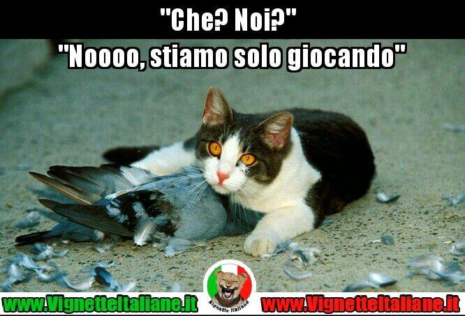 Sì, certo, è proprio come dice lui  #vignetteitaliane.it #vignette #italiane #immagini #divertenti #lol #funnypics #gatti