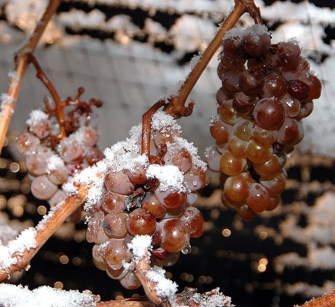 Canada is one of the largest producers of Icewine in the world!