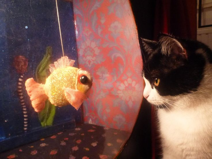 Cat meets Fish. Kukulu Fishie was made by Tereza, the cat is called Mila and lives with Lena. Loves puppets. (c) Lena Stael Kohut
