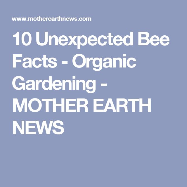 10 Unexpected Bee Facts - Organic Gardening - MOTHER EARTH NEWS