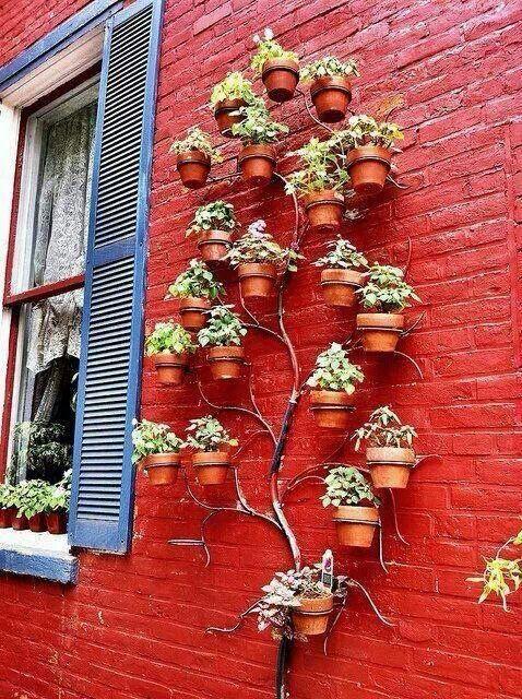 Tree of plants