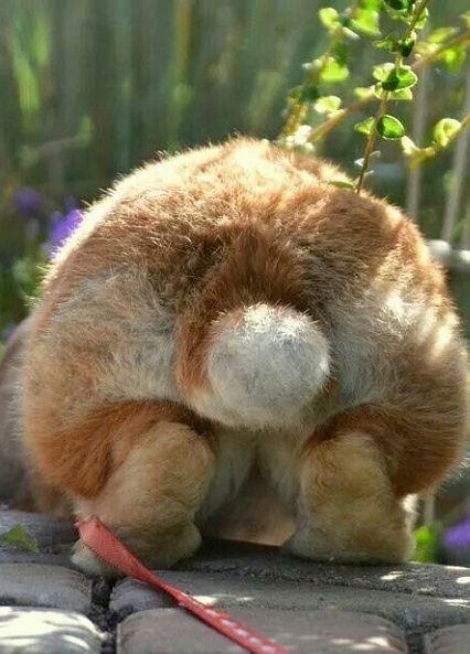 Rabbit - good picture
