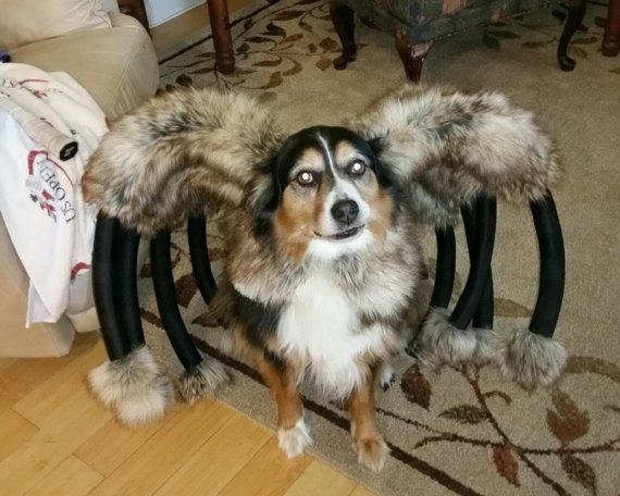 BEST. DOG. COSTUME. EVER!!!! Giant Mutant Spider Dog Costume by digginitdesigns on Etsy