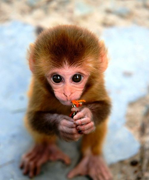 cute baby monkey - loves u. it's time... for understanding... u're the one for the pen. everyday. (some symbol).