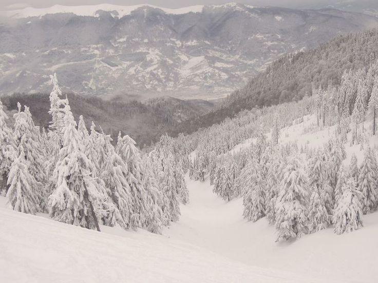 Snowboard la Straja