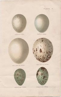 Old Fashioned Eggs - The Graphics Fairy