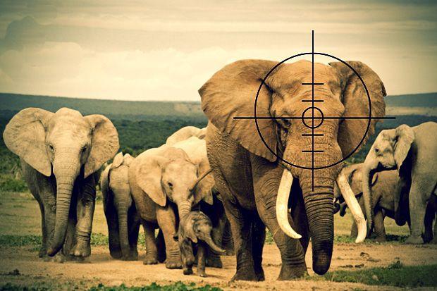Om 10 år är elefanter & noshörningar utrotade. Vill du ändra på detta? Då måste du se den här videon.