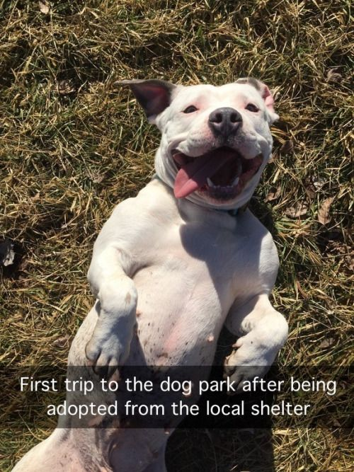First trip to the dog park after being adopted from the local shelter ~ Rescued Adopted Dog