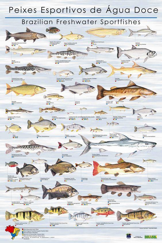 peixes-esportivos-de-agua-doce