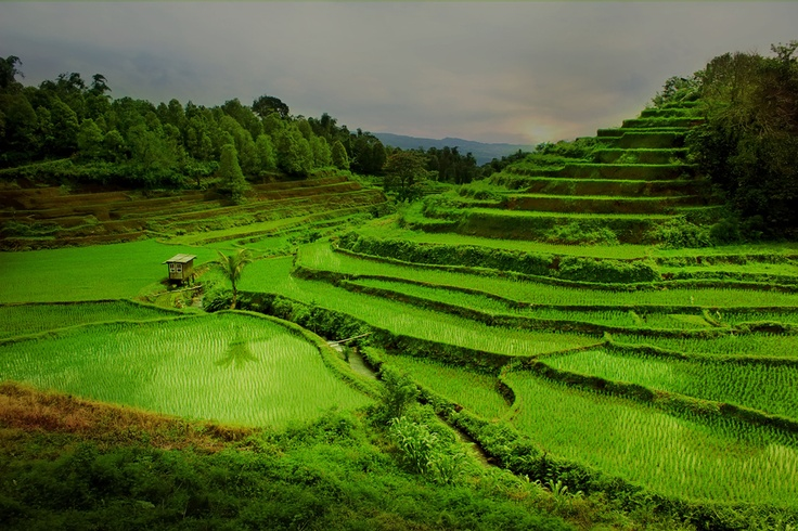 Malino ( south sulawesi Indonesia) is a district located 60 miles from where I live, over the mountains with a very cool air. This is a rice field in a village and around this place, we would see the pine forests are also beautiful waterfalls ... :)