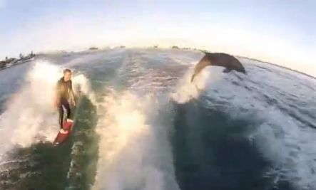Surfing with dolphins. Win.: Buckets Lists, Awesome Videos, Ocean Animal, Dolphins Videos