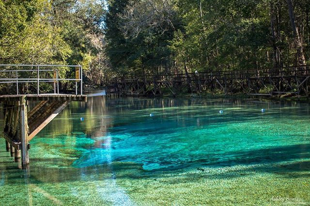 12 Prettiest Springs In Florida Florida Springs Florida Travel Guide Florida Travel
