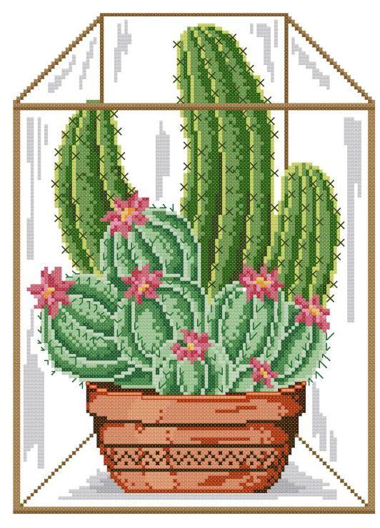 Gallery.ru / Фото #31 - cactus - patrizia61